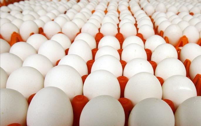 nguồn cung ứng trứng